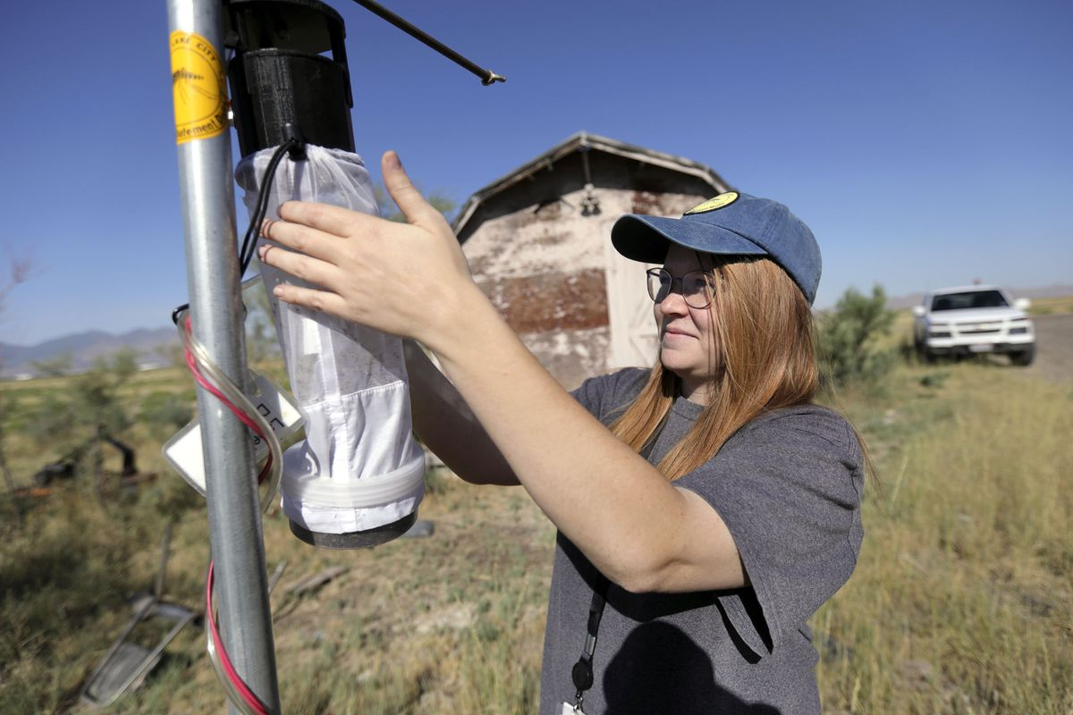 Kirsten Wilson, Salt Lake City Mosquito Abatement District vector control technician, collects a mosquito trap to bring back to the Salt Lake City Mosquito Abatement District lab for mosquito sorting and counting in Salt Lake City on Thursday, July 23, 2020.