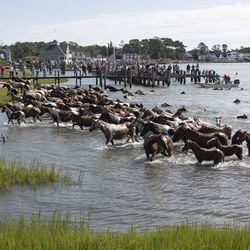 People in boats and on shore watch as wild ponies and foals walk onto the shores of Chincoteague Island, Va., after swimming from nearby Assateague Island during the 94-year-old swim tradition of Pony Penning on Wednesday, July 24, 2019. During the event, the horses navigate through the water for a couple hundred yards, and, after resting, are walked down the streets of Chincoteague and eventually end up at a carnival where the foals are actioned.