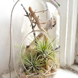 """Terrariums by Philly's own <a href=""""https://www.facebook.com/StitchPrism"""">Stitch Prism</a>, $20-$50 at <a href=""""http://www.vixemporium.com/"""">VIX Emporium</a> and <a href=""""www.facebook.com/nicethingshandmade"""">Nice Things Handmade</a>."""