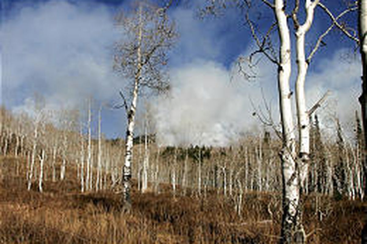 Smoke billows from a prescribed burn taking place in the Halls Fork area past Diamond Fork, which was set Thursday by the Forest Service.