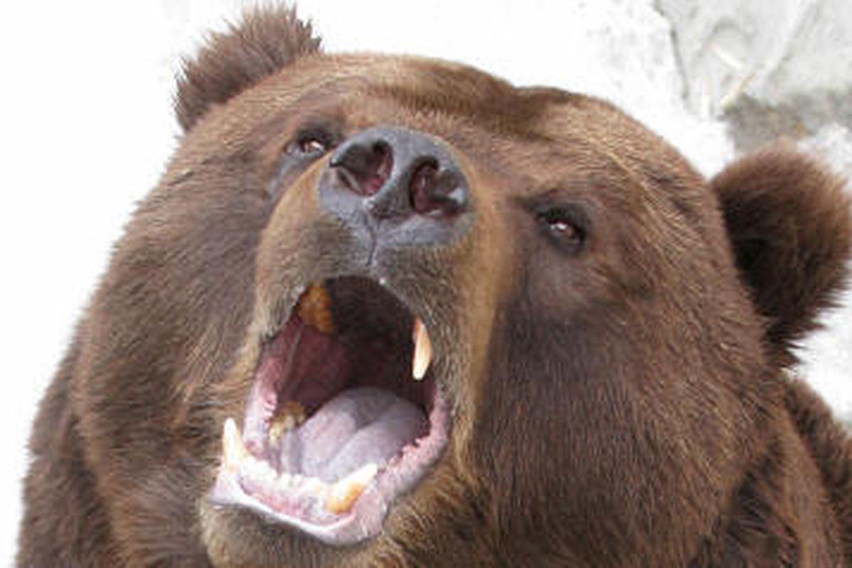 "via <a href=""http://www.thesbnn.com/wp-content/uploads/2011/03/bear-man-mauledr-BROCK-HOPKINS-BEAR-MARIJUANA-large570.jpg"">www.thesbnn.com</a>"