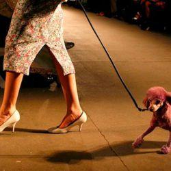 Isaac Mizrahi. Photo credit: Getty Images.