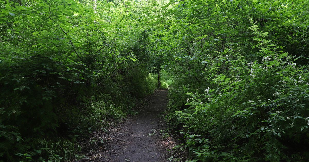 NYC Park Lovers Say City Nature Trails Need More Green