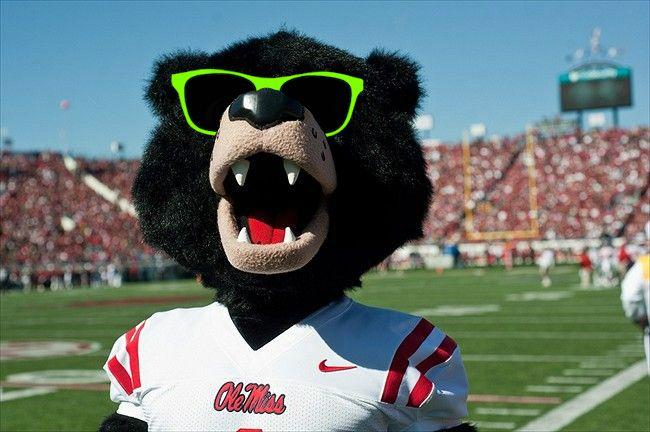 Rebel bear with sunglasses