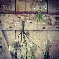 """<strong>Seed to Stem</strong> Hand Blown Glass Jellyfish, <a href=""""http://www.seedtostembotanicals.net/2013/01/new-year-new-goods.html"""">$25</a>"""