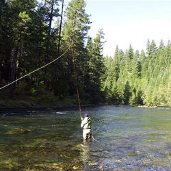 Lee Spencer fishes on North Umpqua near Steamboat, Ore. Spencer is first full-time FishWatch guardian of Big Bend Pool.