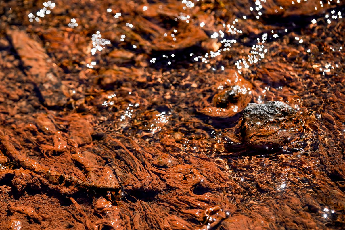 Water coming out of an old mine shaft flows through a thick mat of red deposits in Mill D South Fork of Big Cottonwood Canyon on Wednesday, Aug. 12, 2020.