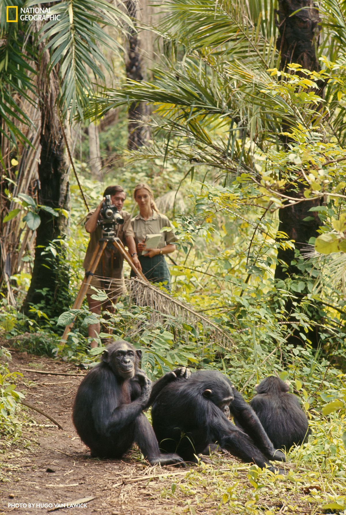 """A new exhibit at the Field Museum, """"Becoming Jane: The Evolution of Jane Goodall,"""" follows her journey from her childhood in England to a career as a passionate scientist studying chimpanzees in Africa."""