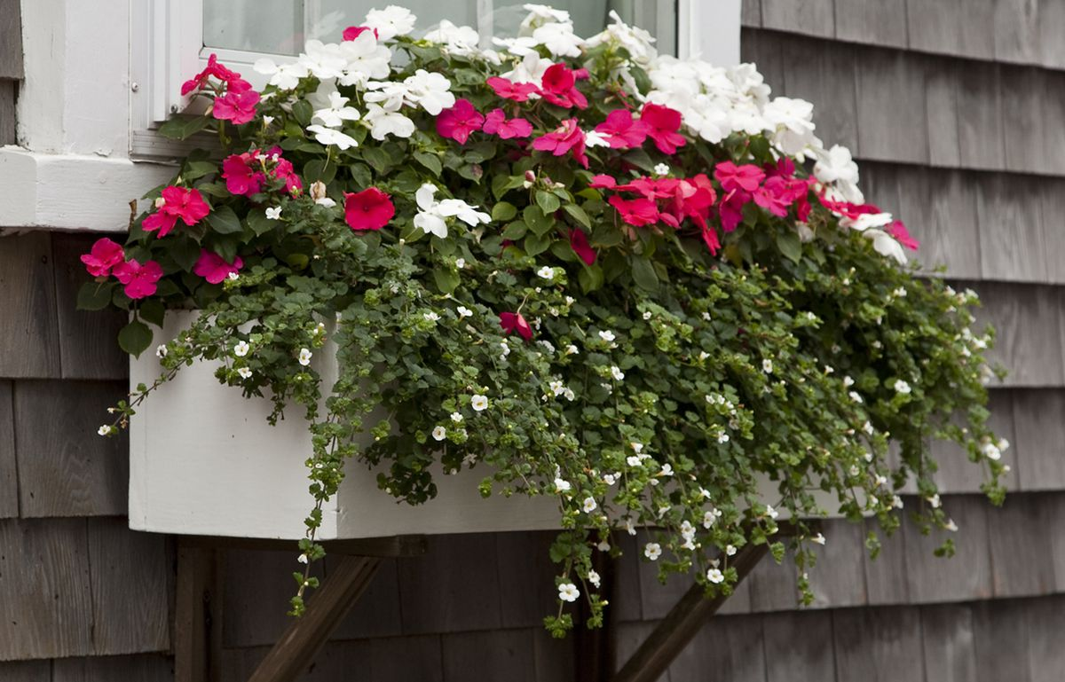 Window Boxes How To Choose The Best Flowers Planters This Old House