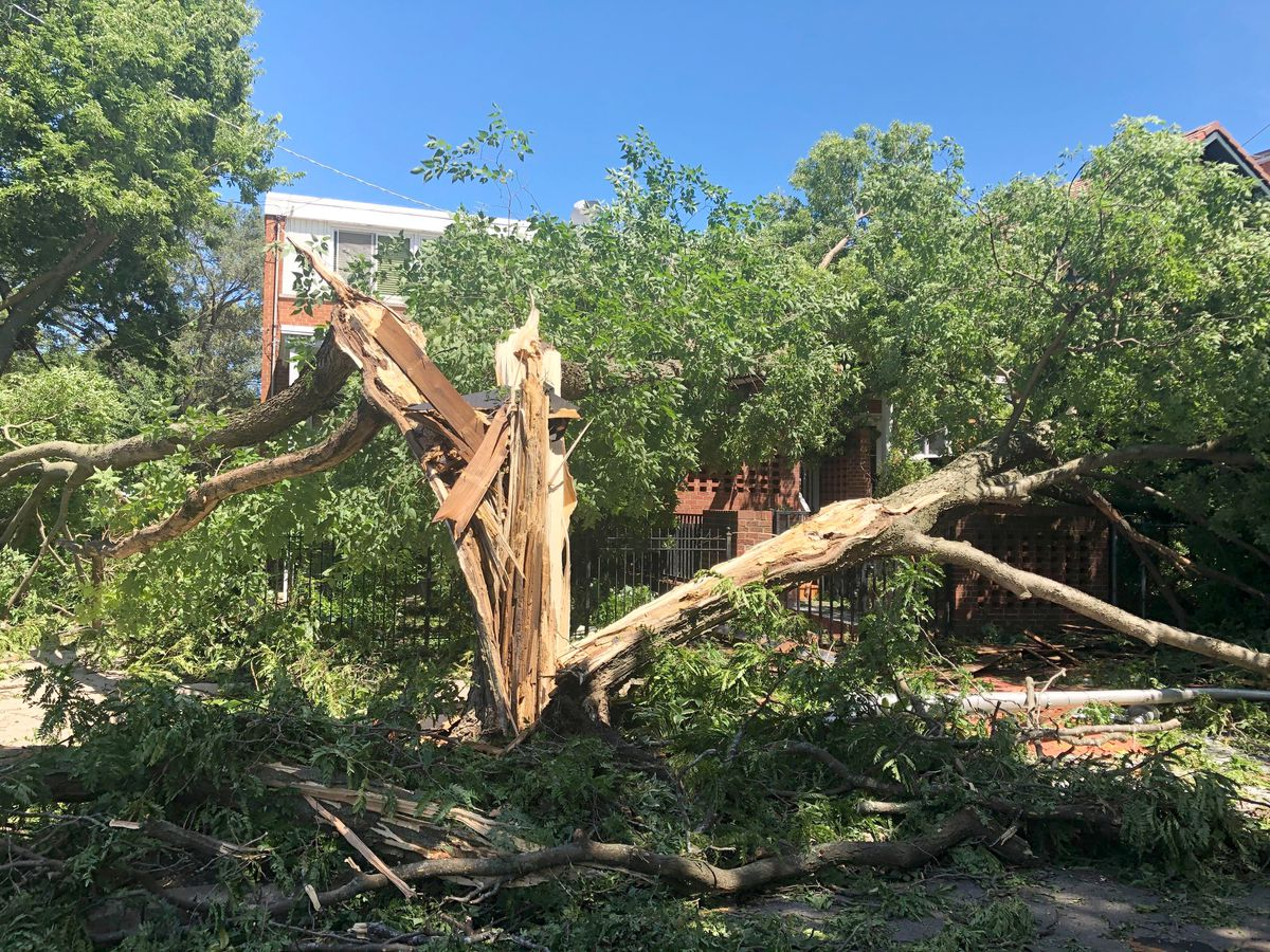 This tree in the 1600 block of West Jarvis Avenue split into several pieces during a severe storm Monday.