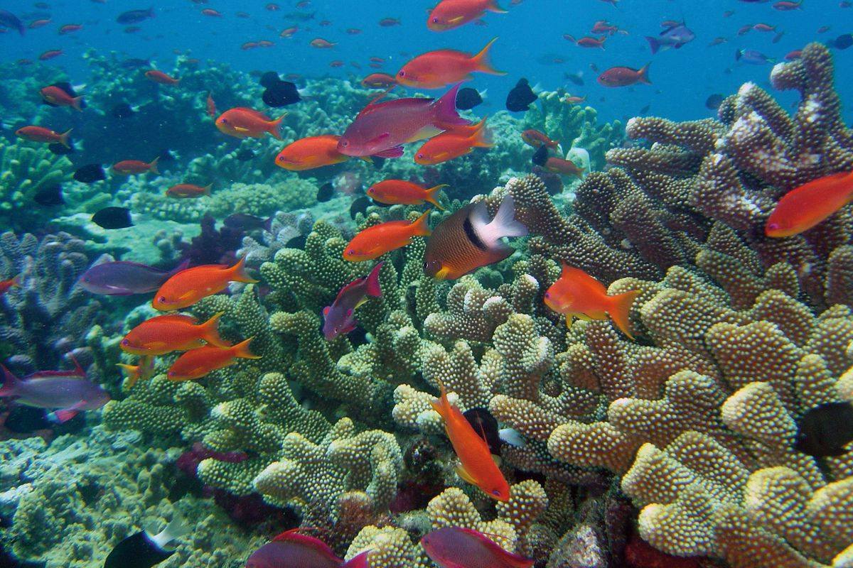 The oceans are acidifying at the fastest rate in 300 million years ocean acidification is expected to affect coral reefs around the world david burdickflickr gumiabroncs