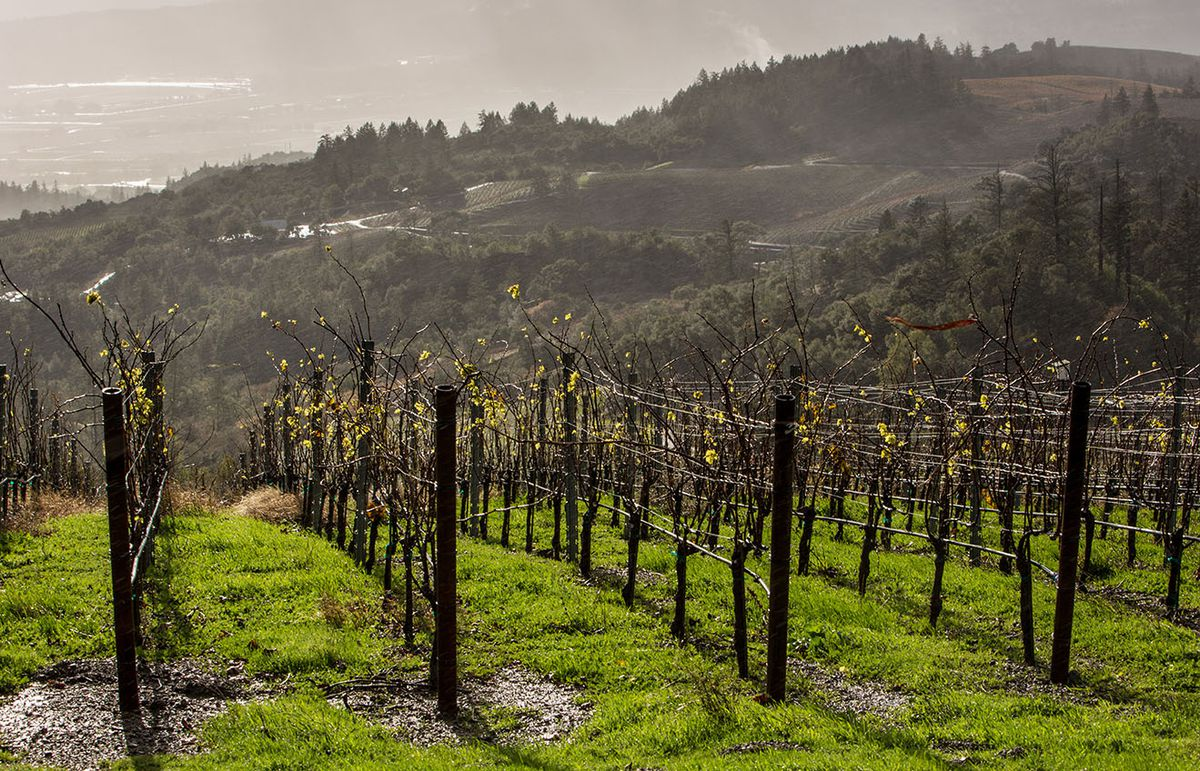 Rains near Geyserville, California. Photo: George Rose/Getty Images