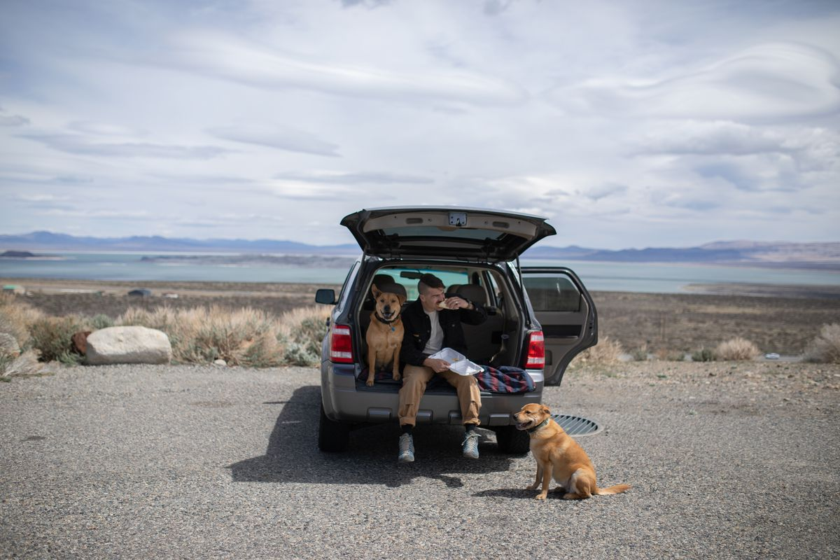 A man sits in the back of his car with two dogs, eating a taco.
