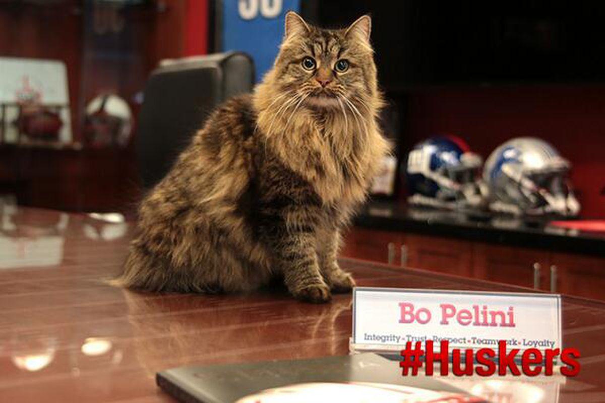 Bo Pelini Cat
