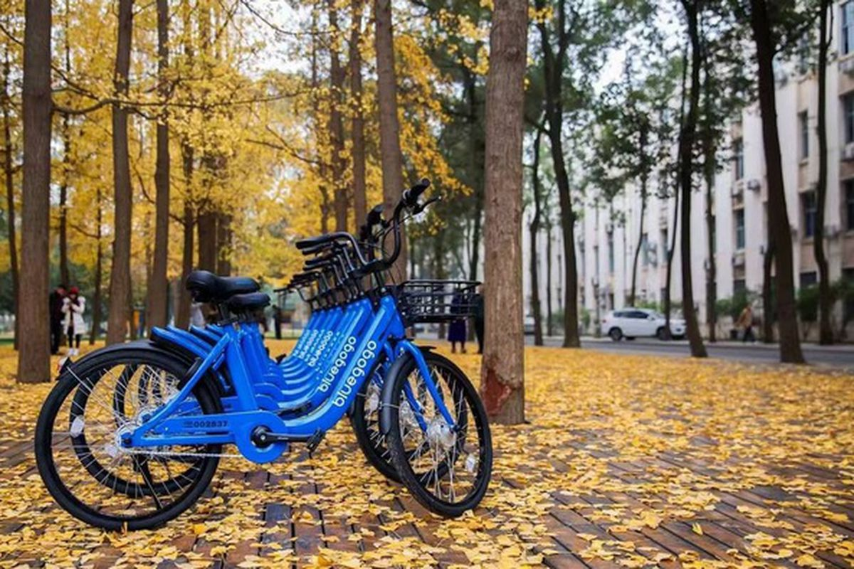 Bluegogo bikes lined up on a street covered with autumn leaves.
