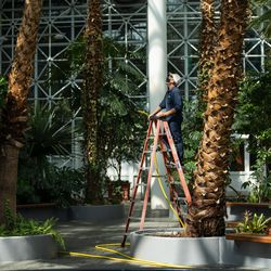 A gardener looks up at trees inside the Crystal Gardens at Navy Pier on its reopening day, Friday morning, April 30, 2021. Navy Pier was closed in 2020 due to the COVID-19 pandemic.