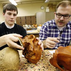 Garrett McCoy, left, and Steven Nelson compare model skulls during an evolutionary biology class at BYU in Provo on Friday, March 30, 2012.