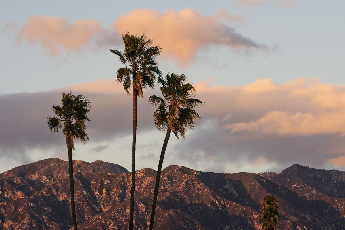 Three skinny palm trees in front of brown mountains tops bend against a cloudy sky.