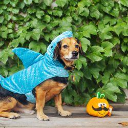 "Top Paw Pet Halloween Shark Costume, <a href=""http://www.petsmart.com/featured-shops/costumes/top-paw-trade-pet-halloween-shark-costume-zid36-30995/cat-36-catid-800791?var_id=36-30995&_t=pfm%3Dcategory"">$11.89—$13.99</a>"