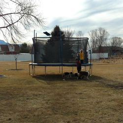 Arianne Brown's children play on a trampoline while her dog and neighbor dogs play below.