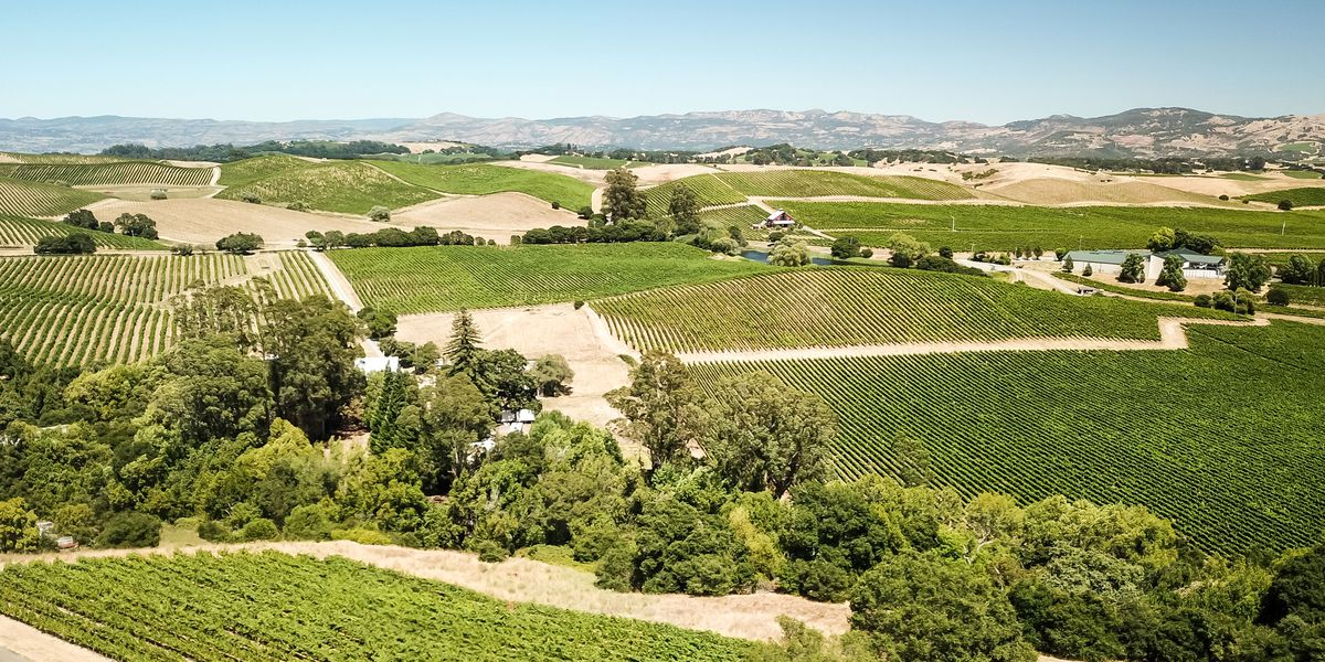 The Curbed guide to Northern California's wine country