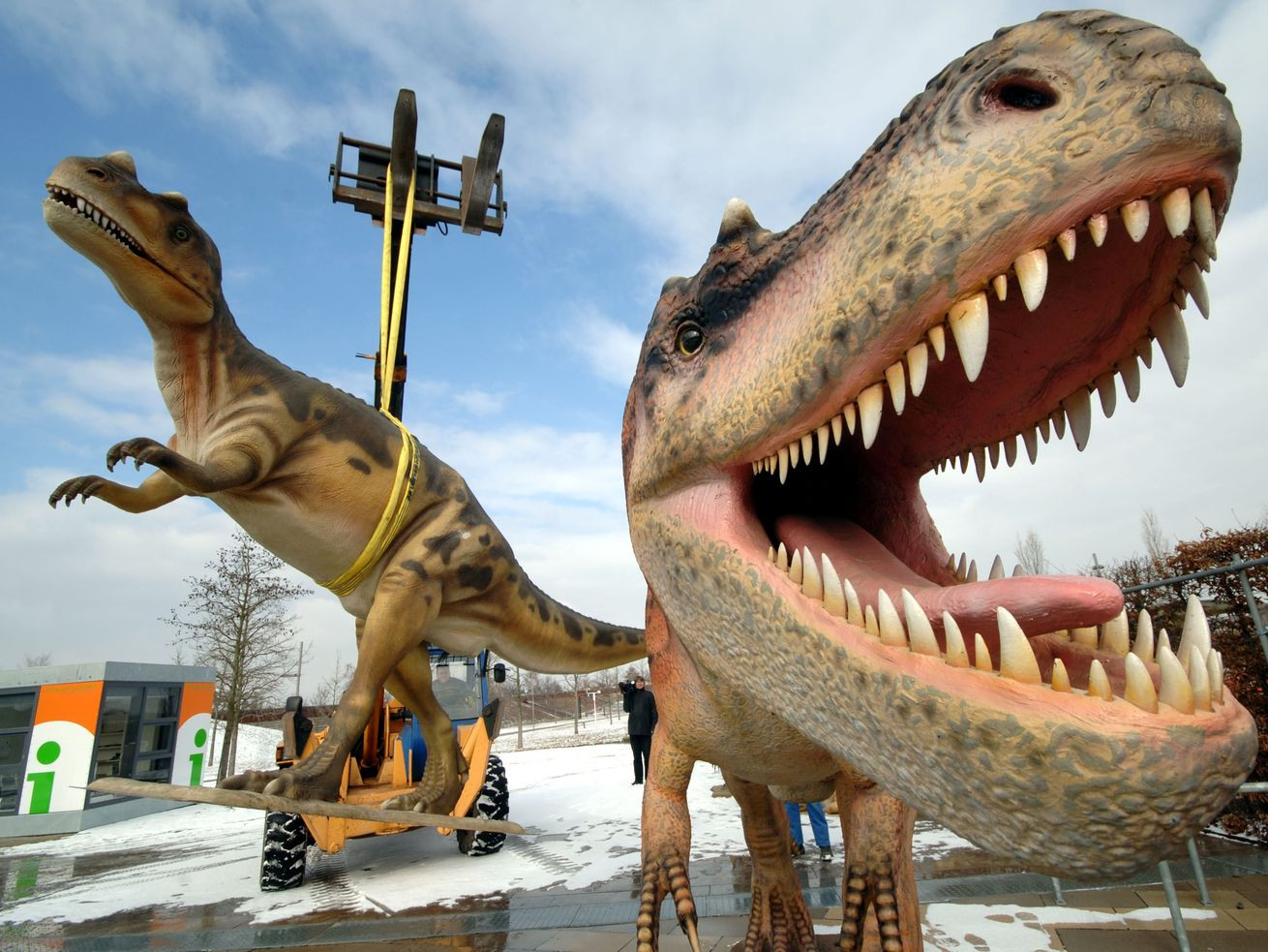In this Tuesday, March 7, 2006 file photo, life-sized Tyrannosaurus rex models are unloaded for a dinosaur exhibition in Potsdam, Germany.