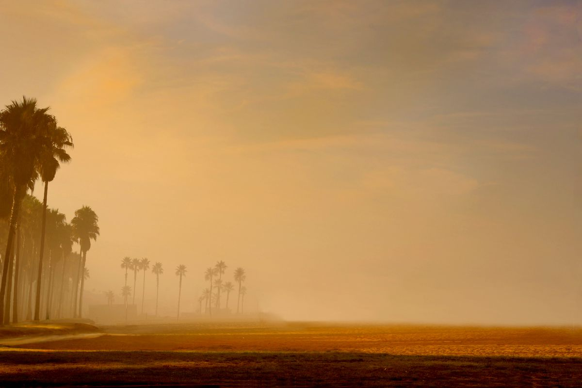 Gold and brown haze off a coastline with palm trees.