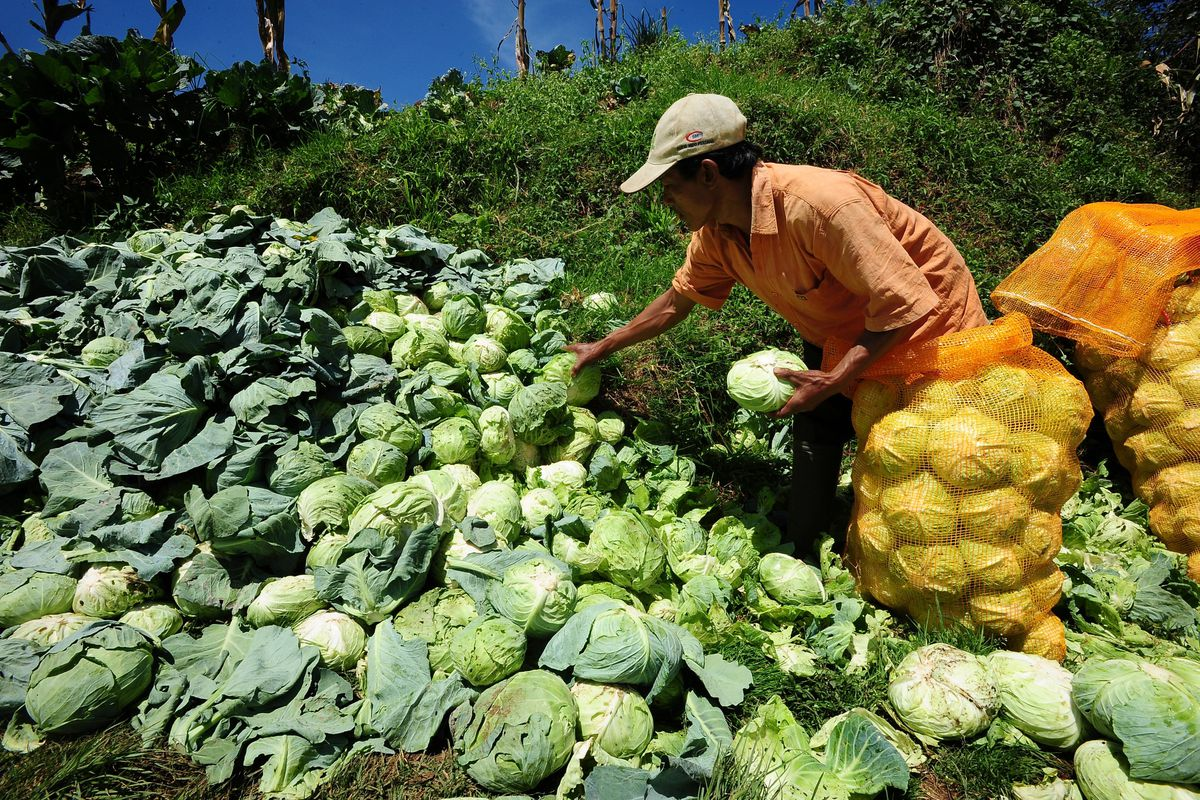 look at all that delicious cabbage