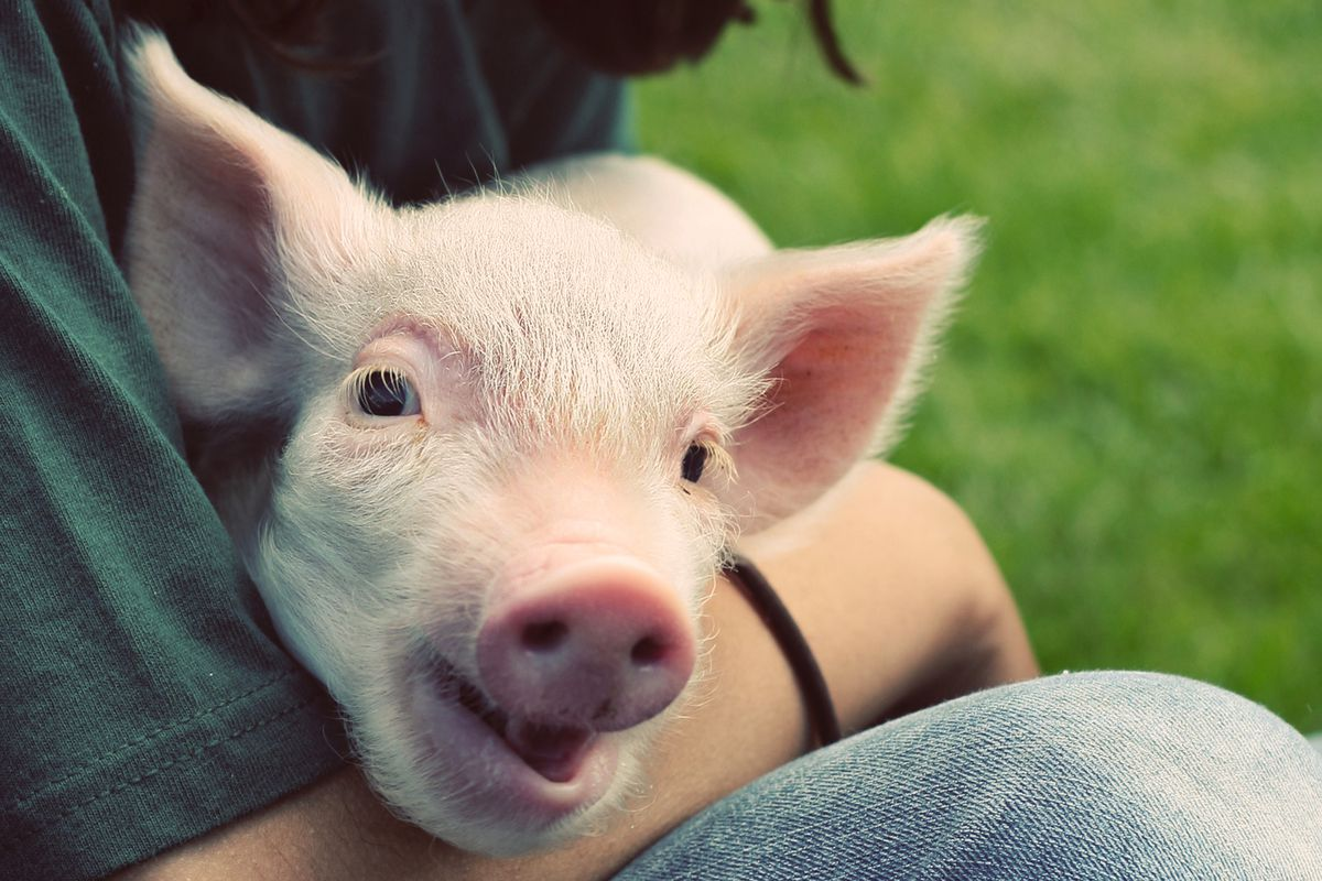 A man holding a piglet