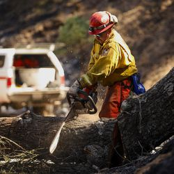 Cal Fire Capt. Kevin Dixon cuts up a tree after he noticed was hollowed out by a wildfire and leaning dangerously over a driveway on Stagecoach Canyon Road in Santa Margarita, Calif., Wednesday, June 28, 2017.