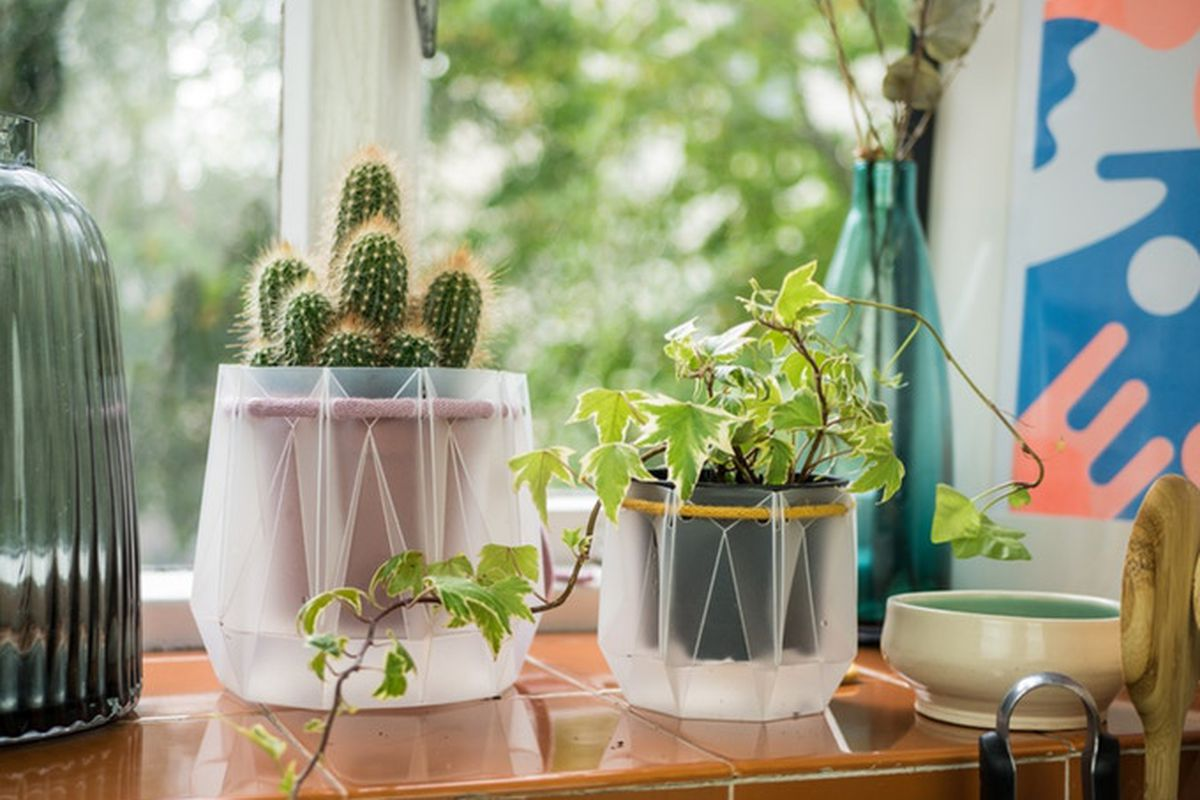 Folded plastic planters on a window sill hold cacti and leafy plants.