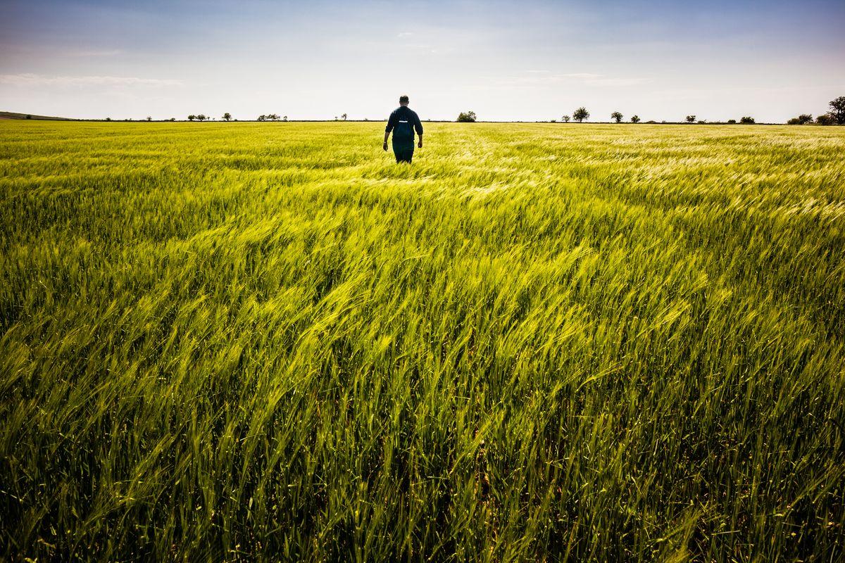 Man walking in a large field