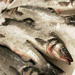 Fresh imported branzino is on display amid mounds of ice at Citarella's store in New York City.