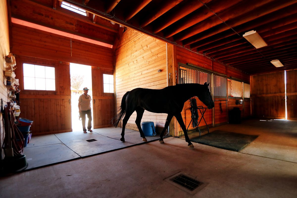 Should the right to keep horses supersede market demands? Residents in Utah city offer differing views