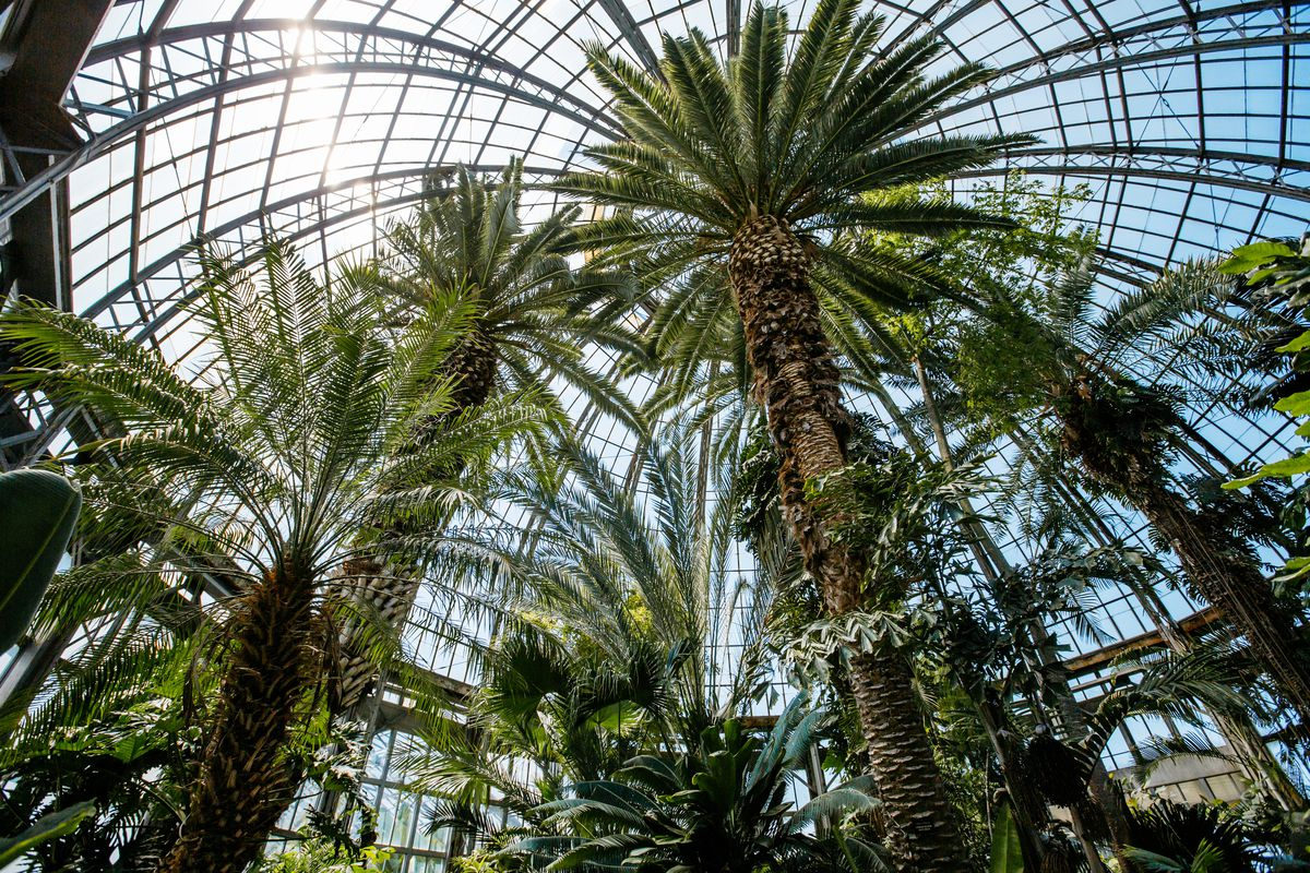 Palm trees photographed from the ground looking up into the glass dome on a sunny day.