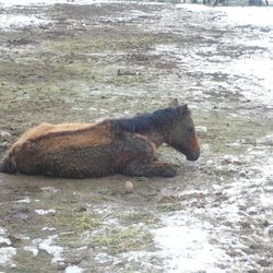 Photos released by the Utah County Sheriff's Office Tuesday, Feb. 19, 2013, show the condition of horses involved in an animal cruelty investigation in Spanish Fork.