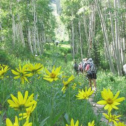 6. Hikers leave the Honeycomb Return chairlift and walk along the trail in Honeycomb Fork.