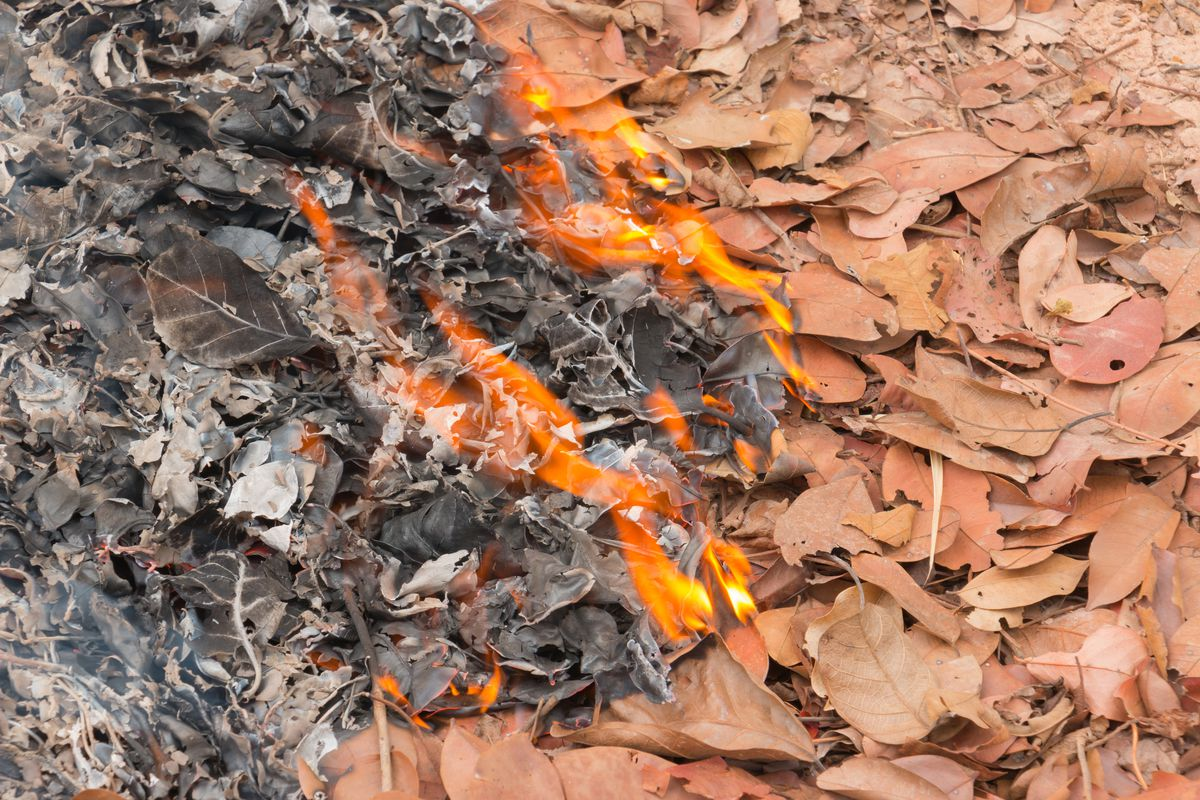 All About Burning Leaves - This Old House