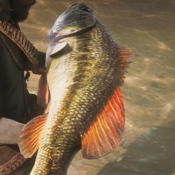 RDR2 Legendary Largemouth Bass maps and location
