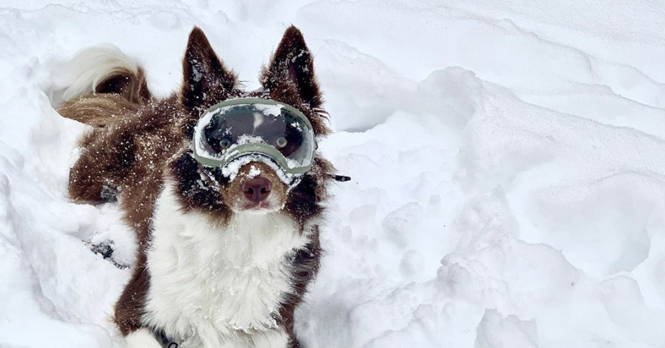 This Dog Freaking Out Over Her Snow Goggles Is The Best Goddamn Thing - EpicNews