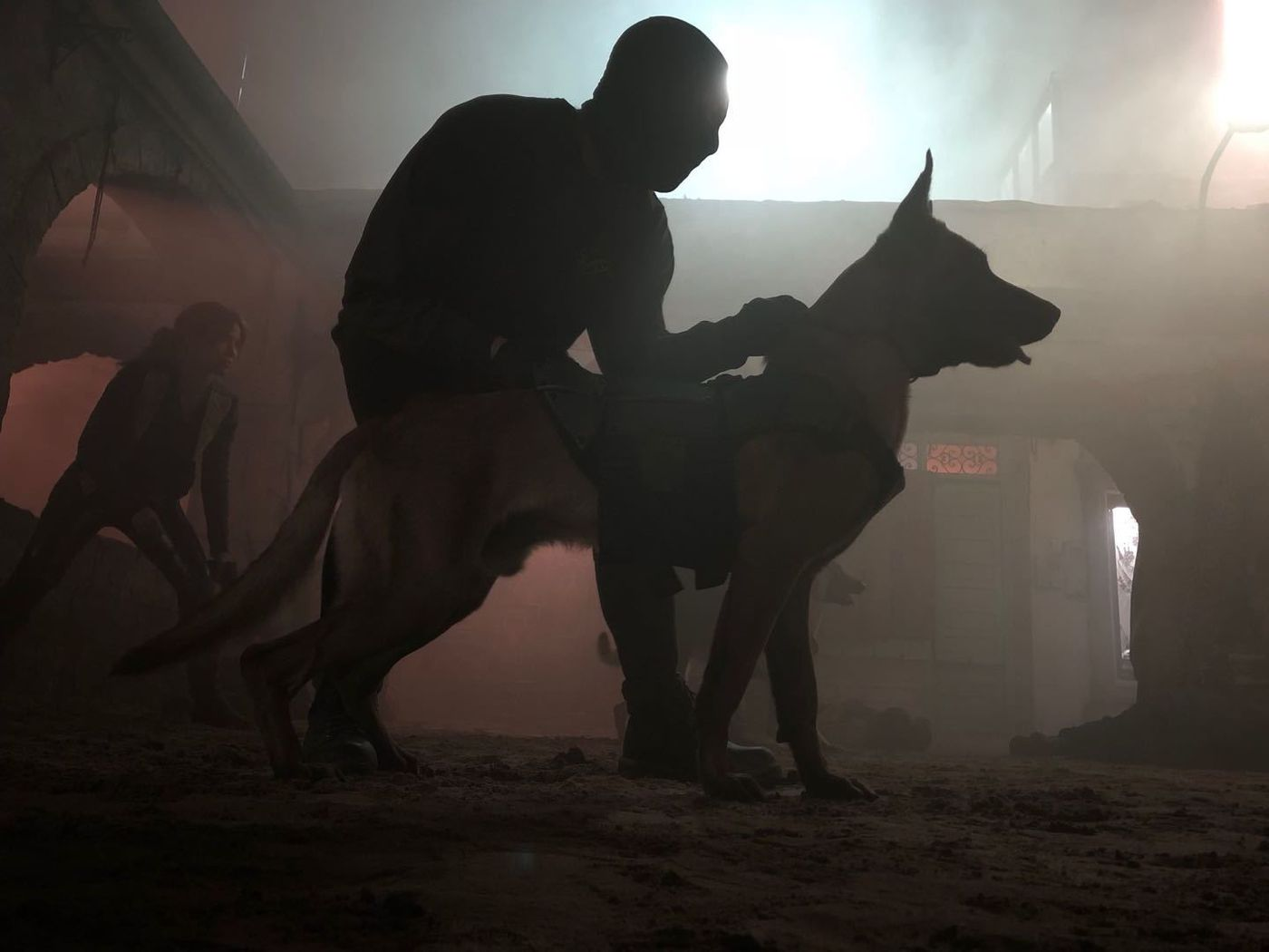 How 'John Wick: Chapter 3—Parabellum' Turned Animals Into