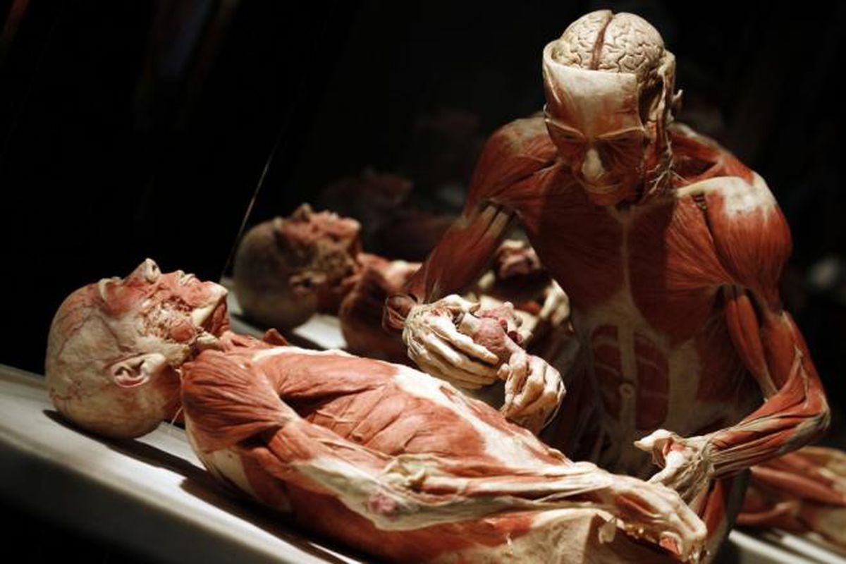 The rise and fall of Dr. von Hagens\' naked cadavers - The Verge