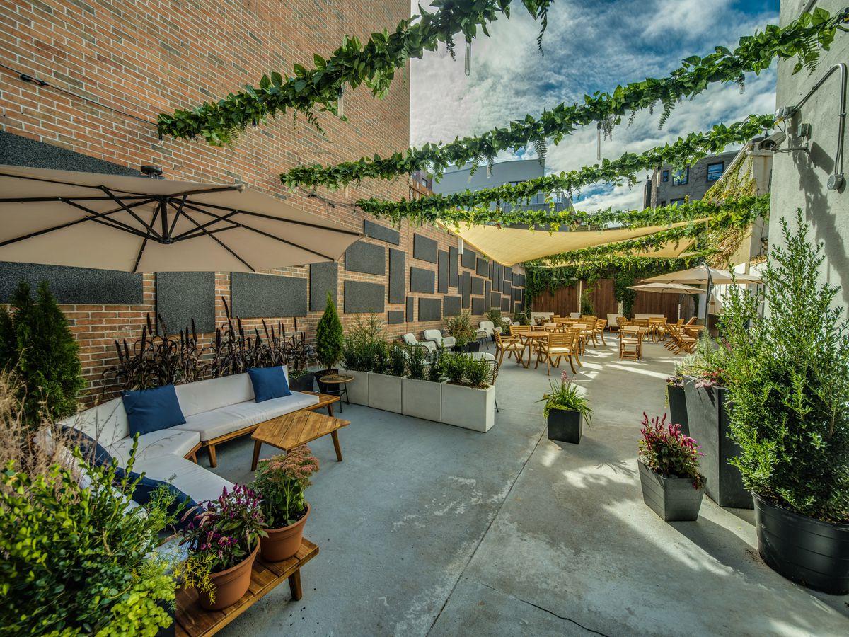 Ten Hope's backyard with lots of plants