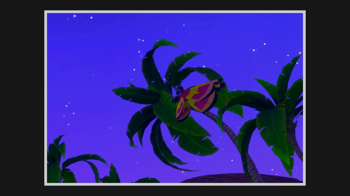Sun Pattern Vivillon flies around palm trees
