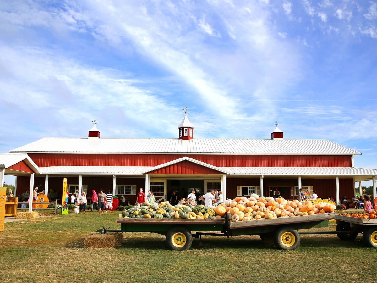 A pumpkin farm in the autumn. There is a truck with assorted varieties of pumpkins on it. The truck is in front of a red farmhouse.