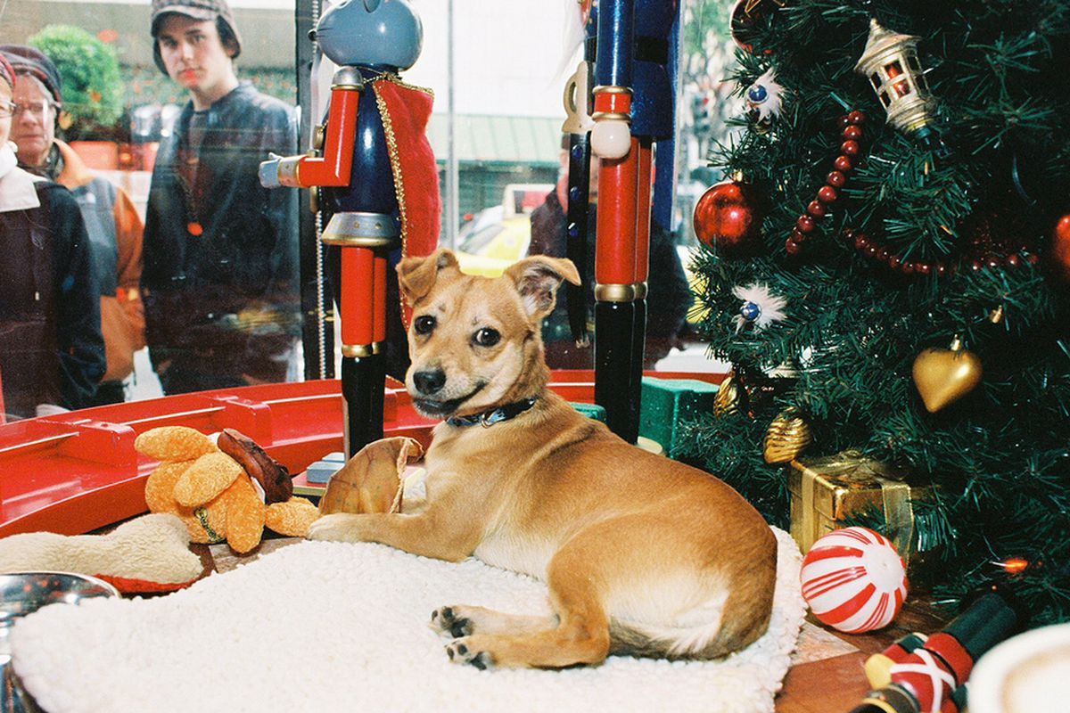 """Shop early, and you can visit the <a href=""""https://www.sfspca.org/get-involved/events/macys-holiday-windows"""">SFSPCA</a> adoption puppies at Macy's. Image <a href=""""http://sf.funcheap.com/event-series/macys-holiday-pet-adoption-window/"""">via</a>"""
