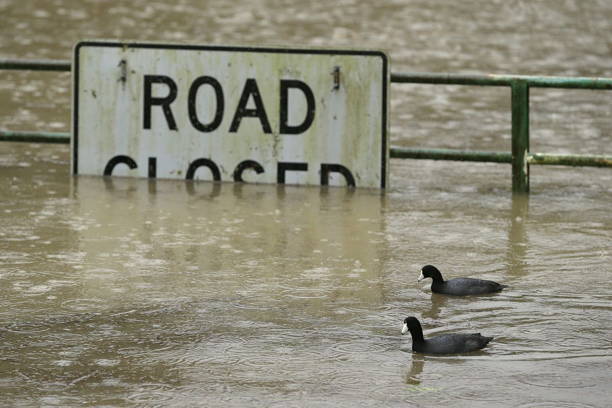 A pair of ducks make their way along a flooded road Tuesday, Jan. 10, 2017, in Monte Rio, Calif. The latest in an onslaught of winter storms comes with blizzard warnings for the Sierra Nevada and a new round of flooding for Northern California river towns