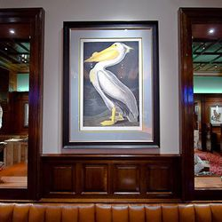 The Hamilton's walls are lined with these bird prints from the Field Museum in Chicago.