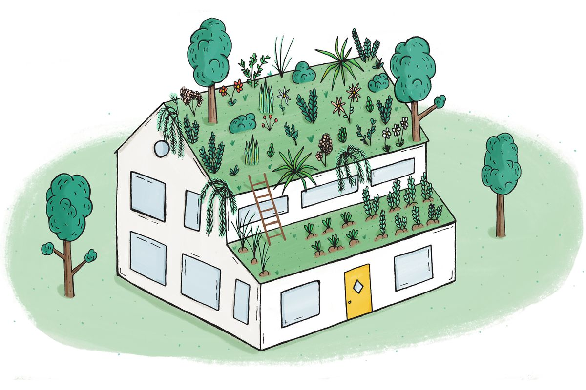Case Study How To Install A Green Roof On A Private Home Curbed