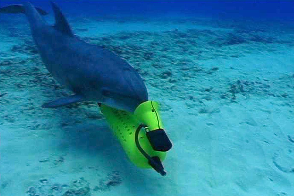 dolphin us navy